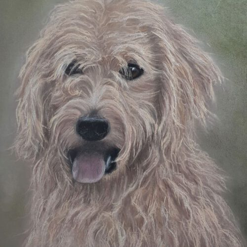 Hundeportrait Pastell 20 x 30 cm  130€